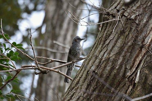 Animal, Forest, Wood, Branch, Bird, Wild Birds