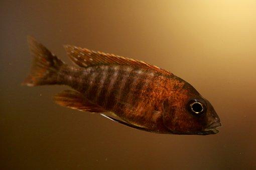 Tropical Fish, Fish, Aquarium, Fish Tank, Water