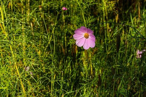 Flower, Gesanghua, Flowers, Views, The Scenery, Plant