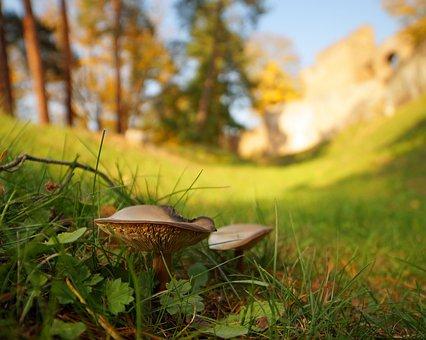 Sun, Forest, Castle, Mushrooms, Autumn Day, Poland