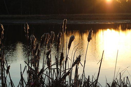 Mastbos, Breda, Forest, Reed, Nature, Landscape