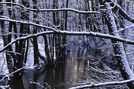 Winter, Winter Forest, Reflection, Forest, Snow, Nature