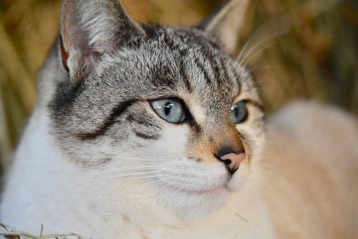 Cat, Pussy, Portrait Cat, Cat's Eyes, Pussy Cloud