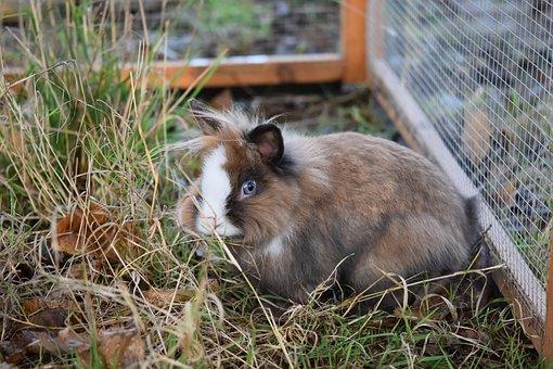 Rabbit, Dwarf Rabbit, Rabbit Company, Rabbit Blue Eyes