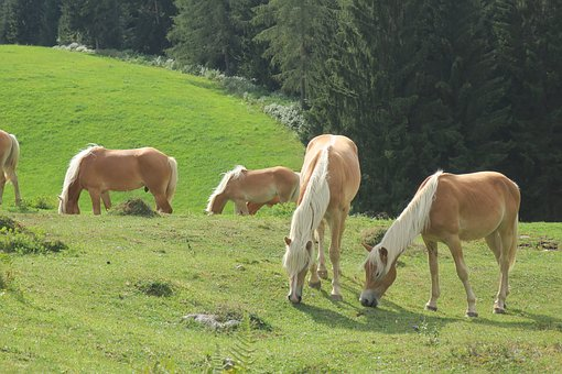 Horse, Horses, Alpine, Nature, Animals, Ride, Pasture