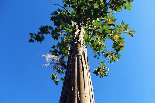 Tree, Sky, Nature, Landscape, Scenic, Summer, Blue