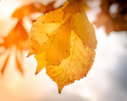 Nature, Leaves, Leaf, Tree, Autumn, Fall, Natural