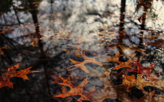 Leaves, Autumn, Water, Fall, Reflection, Nature, Decay