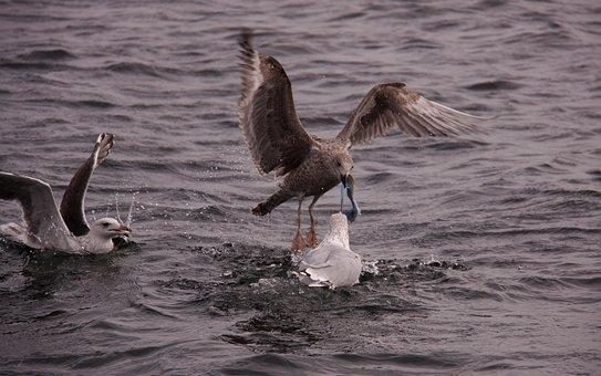 Gulls, Birds, Expensive, Natural, Wings, Sea, Seabird