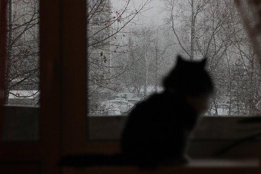Cat, Snow, Winter, Window, Blizzard, Cold, Apartment