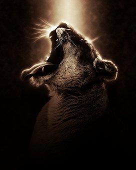 Lion, Lioness, Africa, Safari, Wildlife, Predator