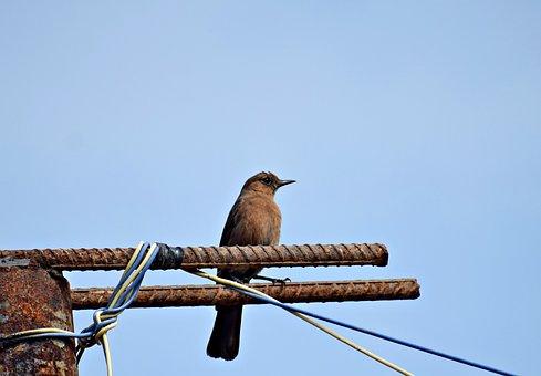 Bird, Nature, Little, Sitting, Animal, Beak, Feather