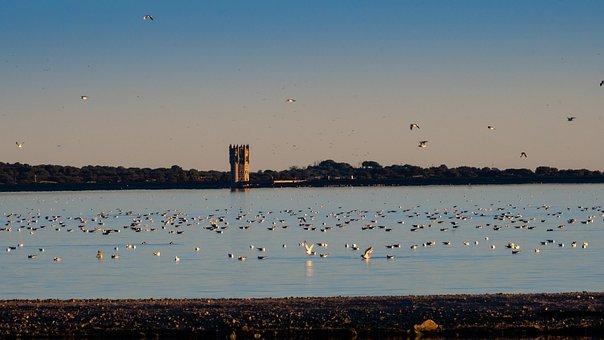 Marsh, Birds, Santillana, Madrid, Waters