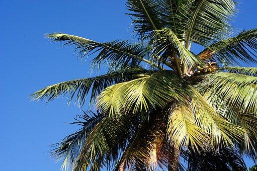 Palm, Blue, Caribbean, Sky, Summer, Travel, Tree