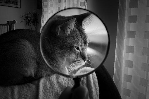 Magnifying Glass, Cat, Pet