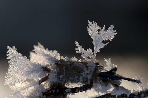 Frozen, Flower, Snow, Winter, Icicles, Frost