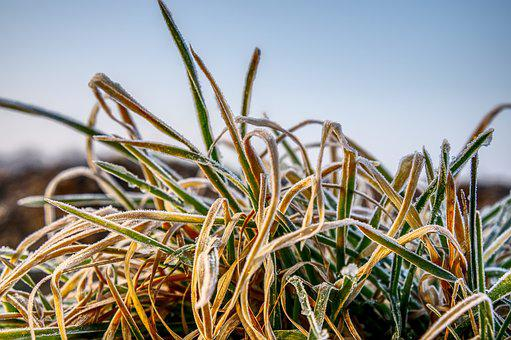 Grass, Frozen, Cold, Frost, Nature, Winter, Hoarfrost
