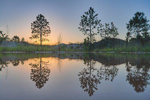 Trees, Water, Reflection, Nature, Landscape, Lake, Tree