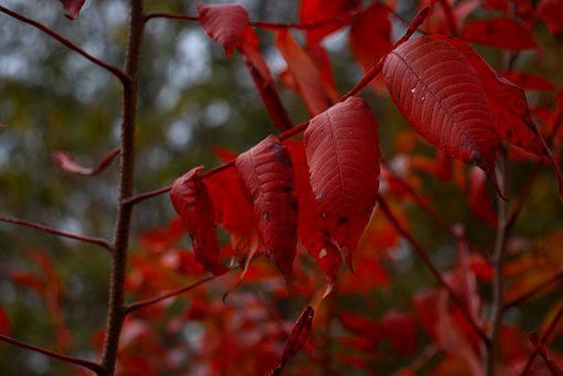 Leaf, Leaves, Fall, Nature, Autumn, Colorful, Plant