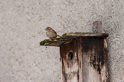 Sparrow, Aviary, Sperling, Bird, Nature, Animal