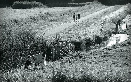 Dutch Landscape, Polder, People, Road, Cow, Ditch