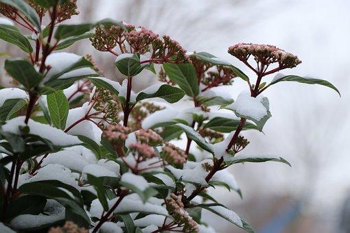 Nature, Flower, Winterbloeier, Sheet, Flora, Garden