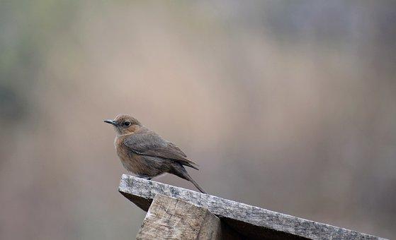 Little, Bird, Cute, Nature, Animal, Beak, Small