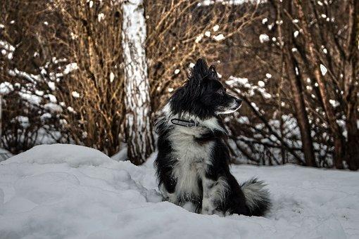 Dog, Snow, Winter, Animal, Nature, Pet, Cute, Portrait