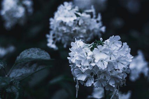Flower, Nature, Spring, Tree, White, Winter, Snow