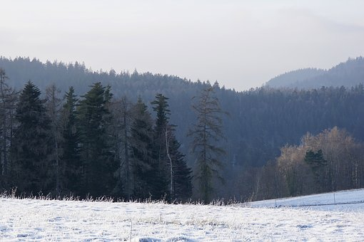 Winter, Black Forest, Cold, Nature, Wintry, Snowy