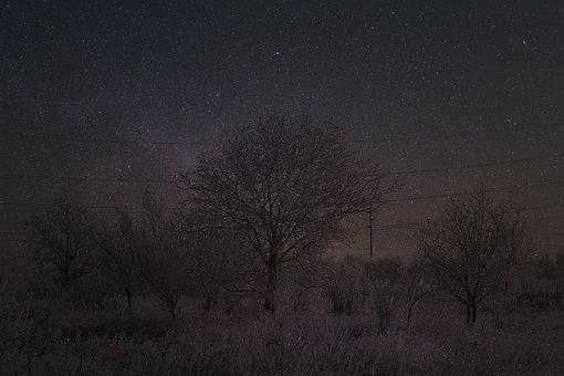 Landscape, Snow, Stars, Winter, Night, Camp, Tree
