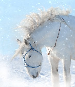 Horse, Snow, Animal, Winter, Cold, Outdoors, Unicorn