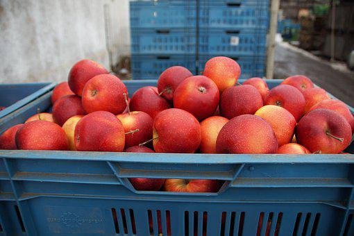 Apples, Red, Sale, Crates, Sets, Harvested, Agriculture