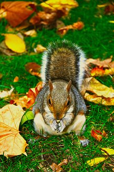 Squirrel, Animal, Cute, Roam, Nature, Automn, Grass