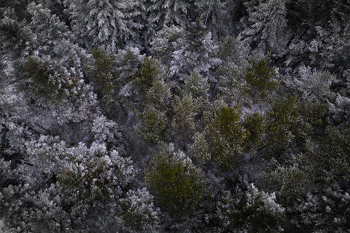 Black Forest, Firs, Trees, Fir Trees, Snow, Nature