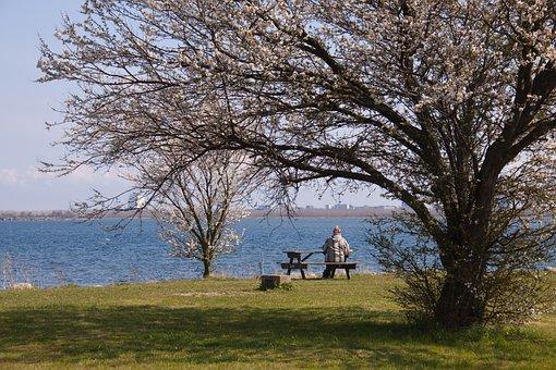 View, Rest, Bench, Wood, Landscape, Natural, Sky, Blue