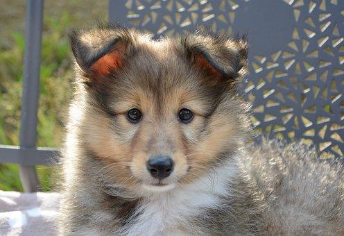 Dog, Pup, Puppy, Dog Toby, Dog Lying