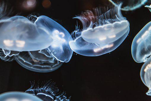 Jellyfish, Animal, Creature, Dark, Deep, Fish, Float