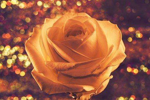 Rose, Flower, Love, Romantic, Rose Bloom, Blossom