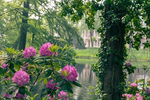 City, Park, Flowers, Bush, River