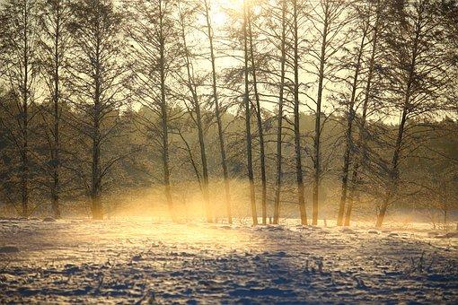 Fog, Snow, Cold, Sunrise, Fairytale, Nature, Idyllic