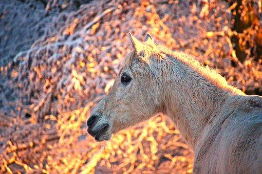 Horse, Winter, Sunrise, Thoroughbred Arabian, Mold