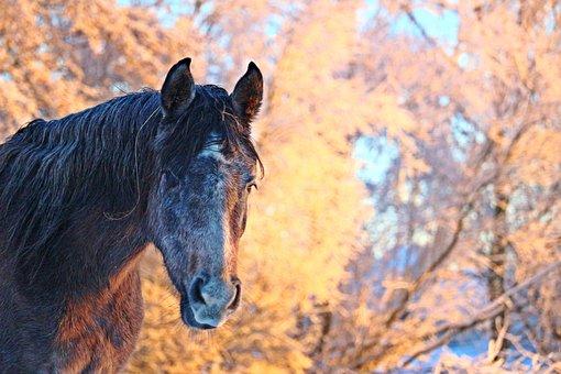 Winter, Horse, Snow, Morning Light, Mare
