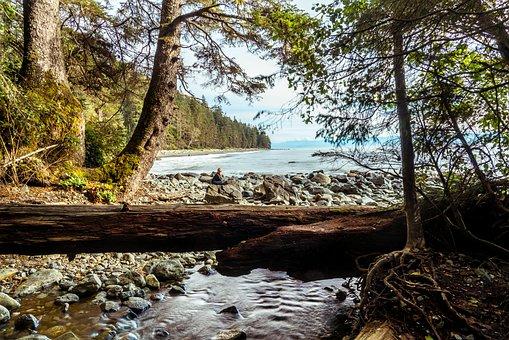 West Coast, Coast, Rocks, Log, Creek, Forest, Ocean