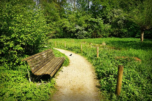 Park, Bench, Seat, Path, Landscape, Peaceful, Serene