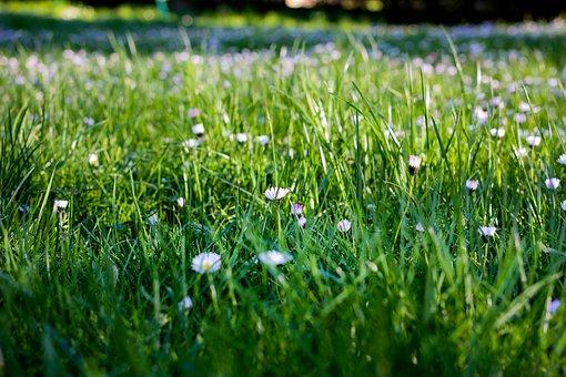 Hay, Prairie, Turf, Pasture, Lawn, Strand, Savannah