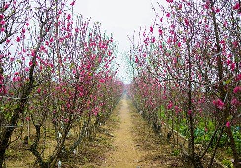 Garden Bed, Cherry Flowers, Peach Blossom