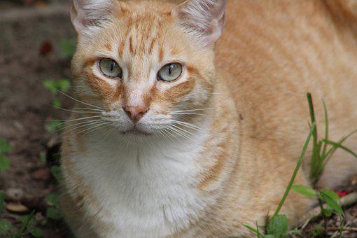 Cat, Feline, Look, Animals, Pet, Kitten, Cute, Mammals