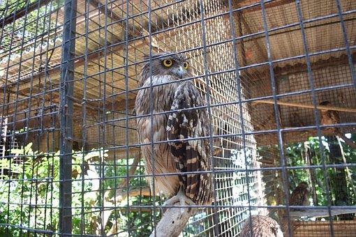 Tropical, Green, Jungle, Fauna, Zoo, Wing, Owl, Bird