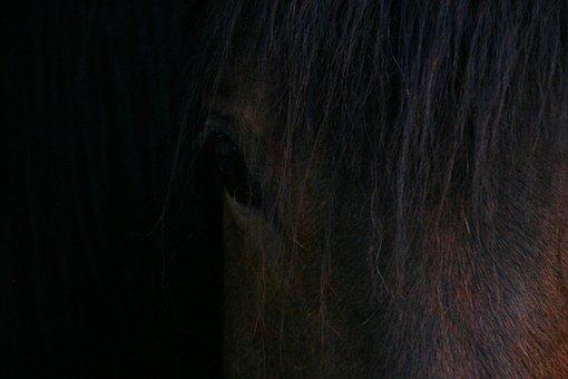Horse, Chamfer, Toupet, Horseback Riding, Look